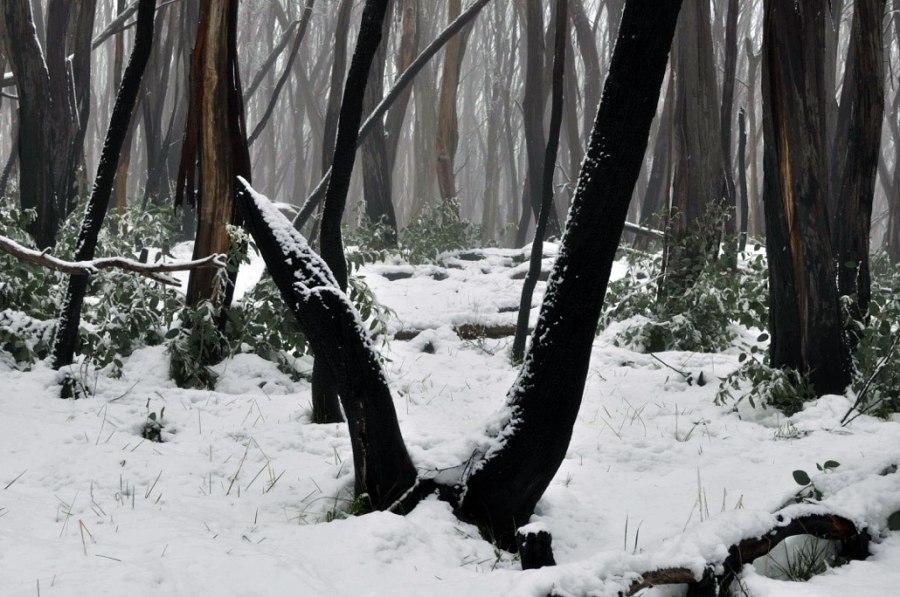 Andrew Follows. 'Burnt Snow' 2011