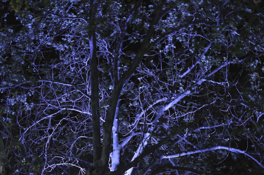 Andrew Follows. 'Canvas, Twigs, Light' 2011