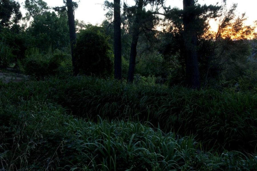 Andrew Follows. 'Green, Montsalvat' 2013