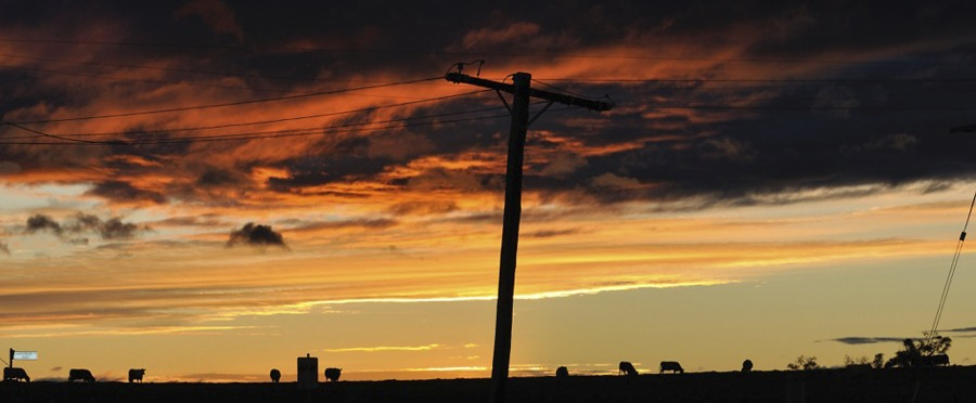 Andrew Follows. 'Sunset cows' 2011