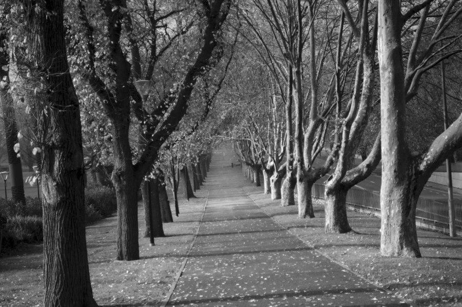 Andrew Follows. 'Winter Path' 2011